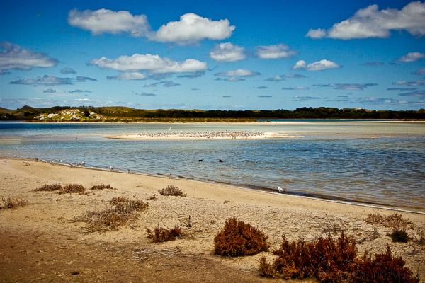 Wyspa Rottnest Island