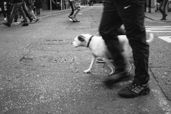 Dog walking in London